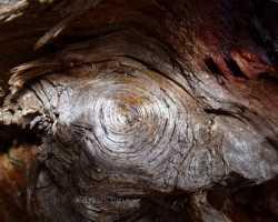 Wood spiral