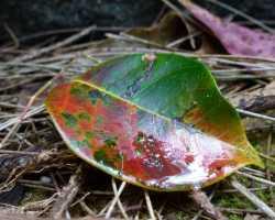 Moist Leaf