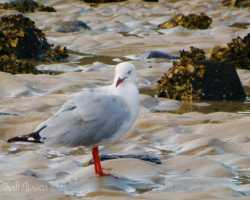 Seagull on shore